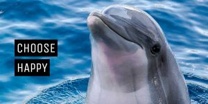 Understanding anxiety helps you to manage it_choose happy dolphin